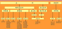 红木的种类以及价格介绍