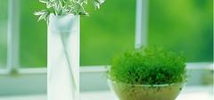 家居风水植物具体有哪些