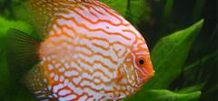 饲养热带鱼有哪些必备装备呢?