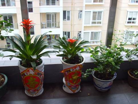 植物家居风水