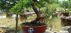 南天竹的养殖方法有哪些?