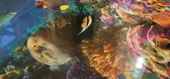 超酷炫的浴室3D效果图,置身于海洋中!
