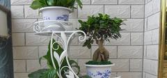 铁艺花架的保养方法有哪些?