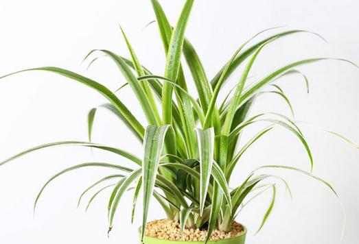 净化空气的室内植物罗列
