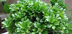 净化空气的植物分别有哪些?
