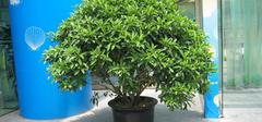 家里适合养殖的盆栽植物有哪些?