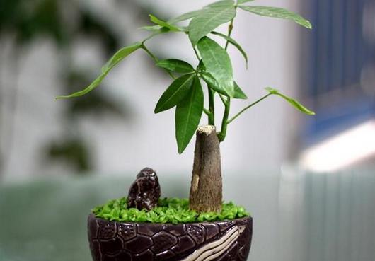 植物风水知识