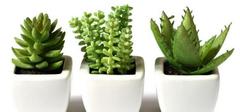 家居风水植物罗列,种类作用不同!