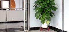 常见的室内盆栽有哪些?