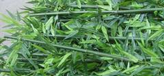 仿真竹子的特点,仿真竹子应用场所
