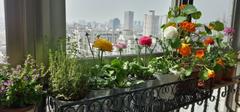 怎样选择阳台花架?