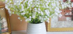 满天星盆栽种植方法有哪些?