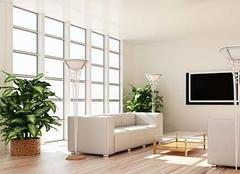 客厅植物摆放风水需要注意什么?