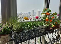 选购一款合适的阳台花架,和春天来个约会