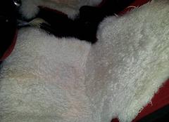 这样清洗与保养羊毛坐垫,还怕不舒适吗?