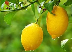 青柠檬和黄柠檬的区别,教你轻松分辨