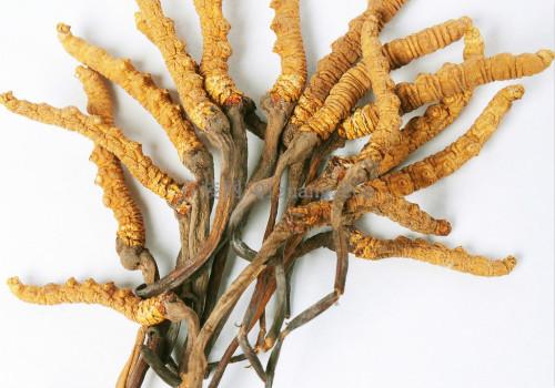 冬虫夏草的功效与作用