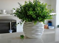 如何将植物正确摆放在家中?