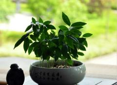 选好室内绿植,打造环保家居