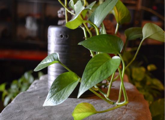 植物效果图