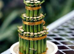 如何养富贵竹才能招财?