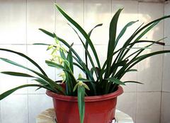 水培植物只有这样养殖 才能保证植物茁壮成长