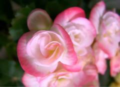 能有效去除甲醛的室内植物有哪些?