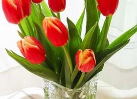 郁金香的种植方法 郁金香的花语是什么?