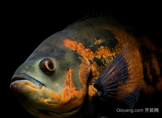 地图鱼常见病