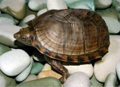 一般乌龟都吃什么食物?