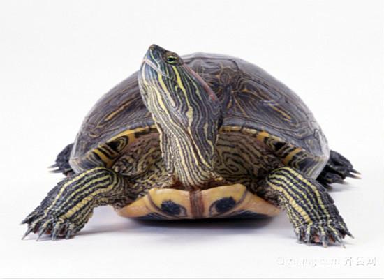 乌龟吃什么食物