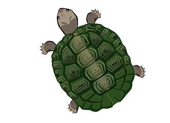 乌龟吃什么食物 广州妹子都精通