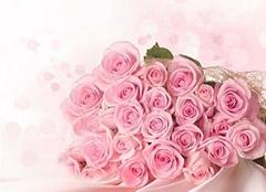 粉玫瑰花语是什么?或许看完你就知道了