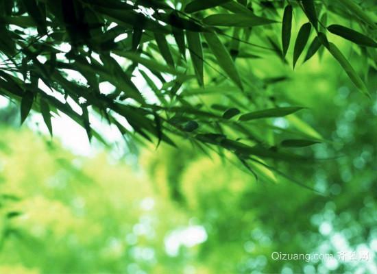 翠竹的象征意义