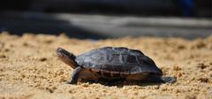 你知道麒麟龟应该怎么养吗?