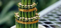 比较漂亮的富贵竹图片有哪些?