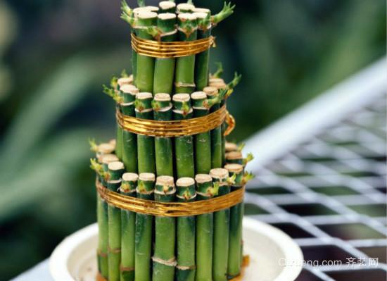 富贵竹图片
