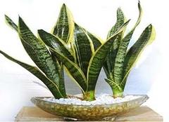 十种室内净化空气植物推荐