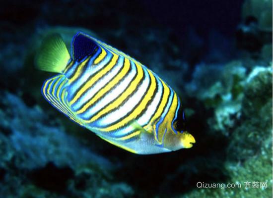 淡水观赏鱼的种类大全