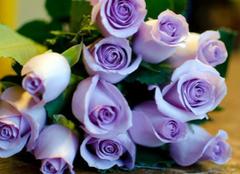 紫玫瑰代表什么,而它的花语又有哪些含义?