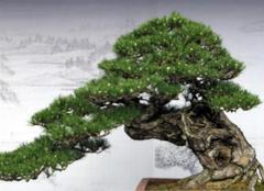 招财进宝树的养殖方法,你都造么?