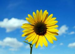 那些比较美的太阳花图片,你都见过没?
