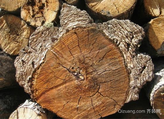 降龙木效果图