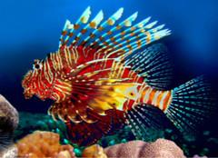 常见的热带鱼种类,你都认识么?
