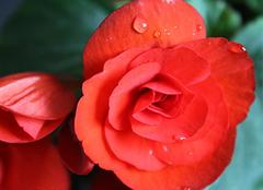 海棠花的养殖方法,你知道吗?