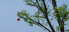 你知道房前屋后应该种什么树么?