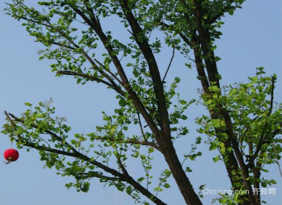 房前屋后种什么树