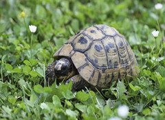 小乌龟吃什么 小乌龟该喂什么