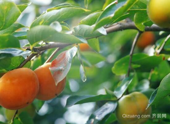 杏树效果图