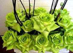 绿玫瑰图片及其花语